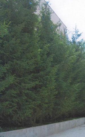 Ландшафтные работы, посадка деревьев